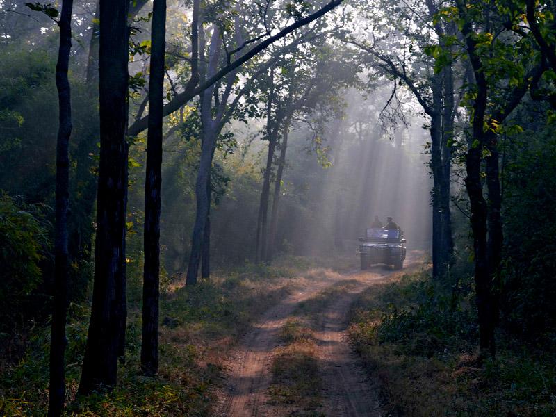 Morning Safari at Bandhavgarh