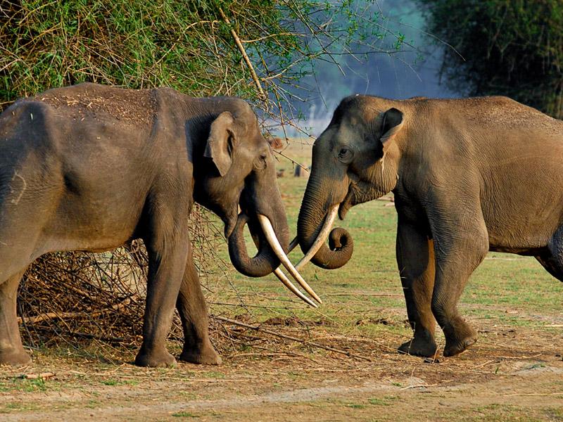 Asian-Elephant at Nagarhole National Park
