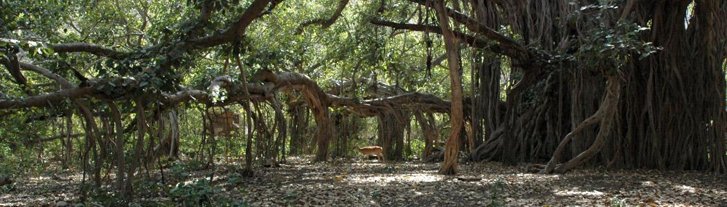 The Amazing Fauna at Ranthambore