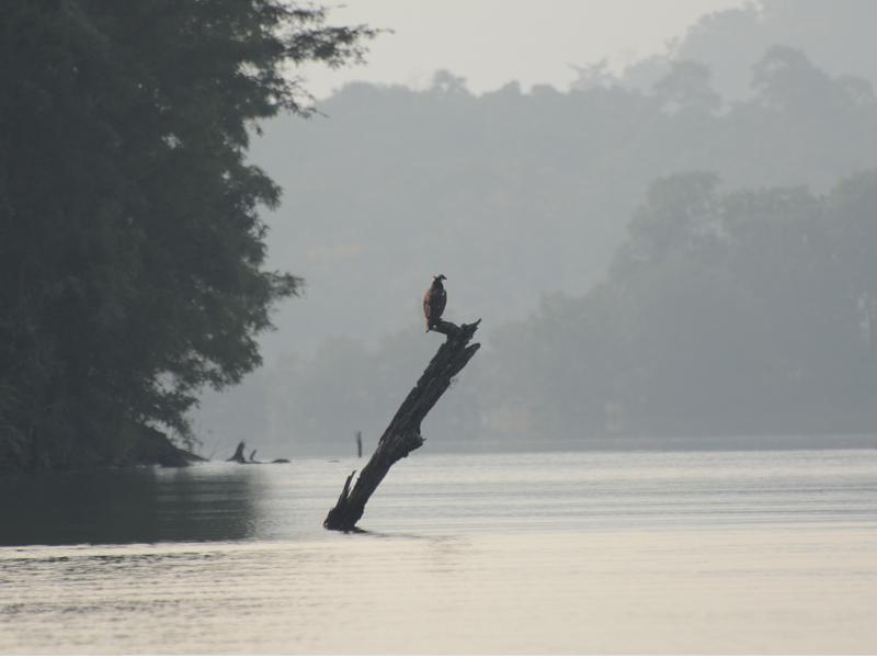 View of Denwa River in the Satpura National Park