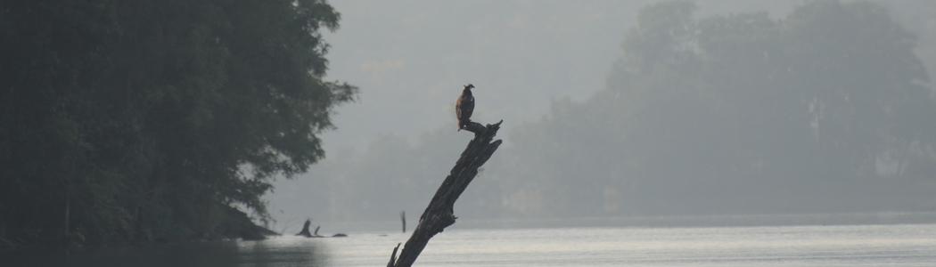 The Satpura National Park